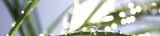 3 Tipps für bewusstes Raumerleben, Fengshui, Feng Shui Konzepte Bamberg